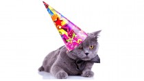 Oldest Cat in the World Enjoy's 24th Birthday!