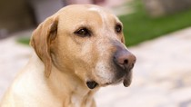 Canine Bladder Infection: New Study May Change Treatment