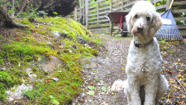 Celebrating Earth Day: Going Green With Your Pet