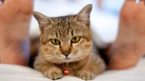 Copy Cats: New Study Shows Feline Moods Influenced by Owners
