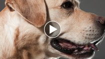 Dog Saves a Life with the Heimlich Maneuver, This Really Happened!