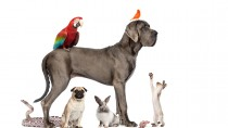 Dogs, Cats, Birds, and Bunnies in One House