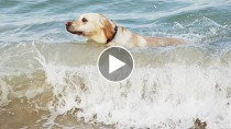 Dramatic Near-death Dog-rescue Caught on Tape