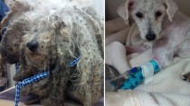 Saving Shrek: Abused Dog Given New Life