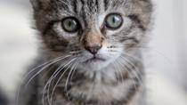 Feral Cat Saves a Helpless Kitten during Tornado