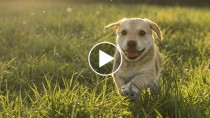 Five Adorable Dog Videos to Make You Ache for Spring