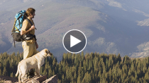 Hiking Causes Three Dogs to Die, One to Faint: How to Keep Your Dog Safe