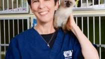 Kate Hurley Shelter Siamese Cat