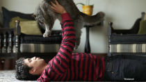 A New Study Leads Some to Assume that Cats Don't Love Us – Not True!