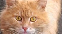 Orange cat with big eyes