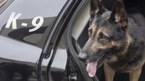 Police Dogs May Face Early Retirement—Find Out Why!