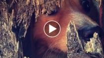 Dog peeking through hole
