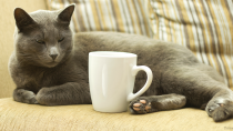 Cat Café to Open This Summer in Montreal