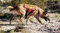 Rescue Dogs Search Washington Mudslide