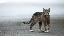 Cat Wanders 150 Miles to Former Home
