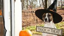 5 Horribly Hilarious Halloween Pet Videos