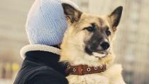 Chicago's Mystery Dog Virus Outbreak Identified as Asian Strain