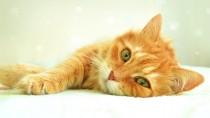 Frozen Kitten Gets Nursed Back To Health