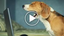 January 2015's Top 5 Pet Videos