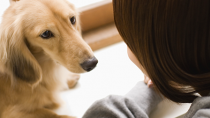 New Research: What Does it Mean When Your Dog Stares?