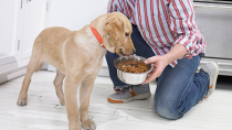 Second Company Recalls Dog Food Due to Listeria Concerns