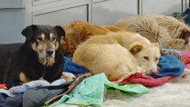 Stray Dogs Attend Funeral, Gives Mourners Hope