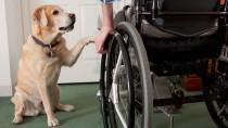 Heroic Dog Dedicates his Life Saving his Owner's