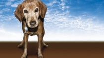 A list of resources to help you pay your veterinary bills