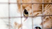 'Tis the Season of Giving: Pet- and Animal-Based Charities