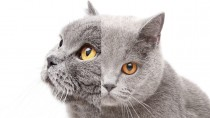 Two-faced Cat Lives for 15 Years! It's Not Fiction