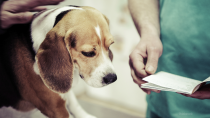 Veterinary Referral: When Should I Ask for a Second Opinion?