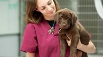 Veterinary Technician Week!