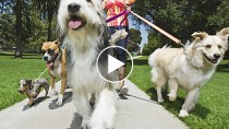 "Watch What Happens When These Dogs Hear the Word ""Walk"""