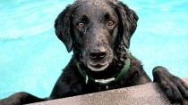 Water Safety for Dogs