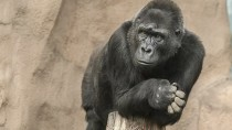 Wildlife Parks: Right or Wrong?