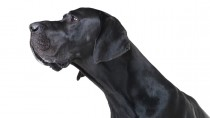 World's Tallest Dog Dies at the Age of Five