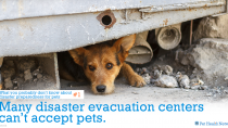 Many disaster evacuation centers can't accept pets