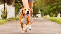 10 Essential Pet Health Tips for the New Year