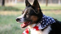 10 Pet Prep Tips for Memorial Day Weekend