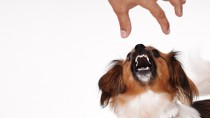 10 Questions to Help You Avoid Dog Bites