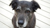 Behavior Problems in Senior Pets