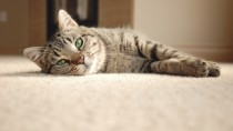 Why You Should Spay or Neuter Your Cat