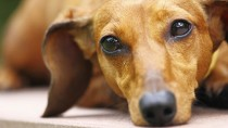 5 Dog Diseases Vets Don't Think You Know, But Should