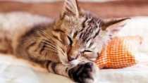 Kitten sleeping on a pillow