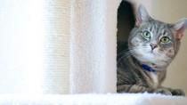 Cat hiding in tower