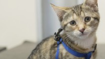 7 Ways for Your Cat to Avoid Emergency Surgery