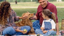9 Tips for Having a Dog Safe Picnic