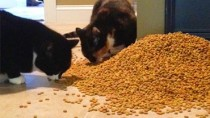 5 Reasons Why Pet Obesity Is a Serious Problem