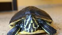 Reptiles: Part 2