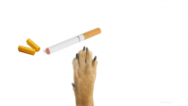 Are Electronic Cigarettes Poisonous to Dogs?